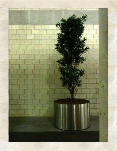 Der neue Baum